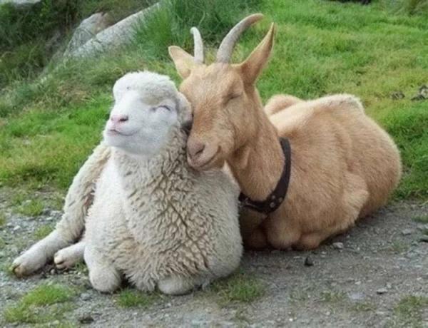 20 умилительных звериных обнимашек, после просмотра которых и вам захочется кого-нибудь обнять