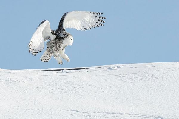 Самые опасные птицы в мире: устрашающая десятка