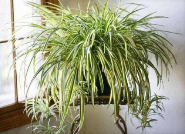 Четыре комнатных растения, которые должны быть в каждой квартире